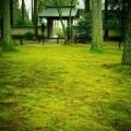 三千院 苔むす庭にて