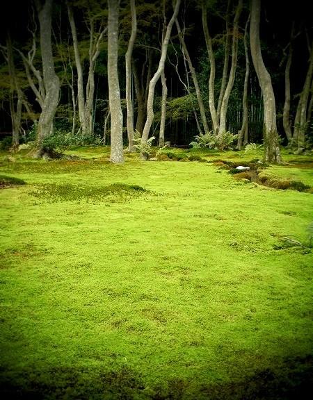 祇王寺 苔の庭園