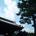 林光院 山門前の松