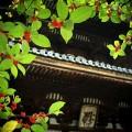 仁和寺 五重塔の前で