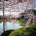平安神宮 東神苑と尚美館