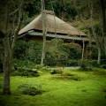 祇王寺 苔庭と草庵