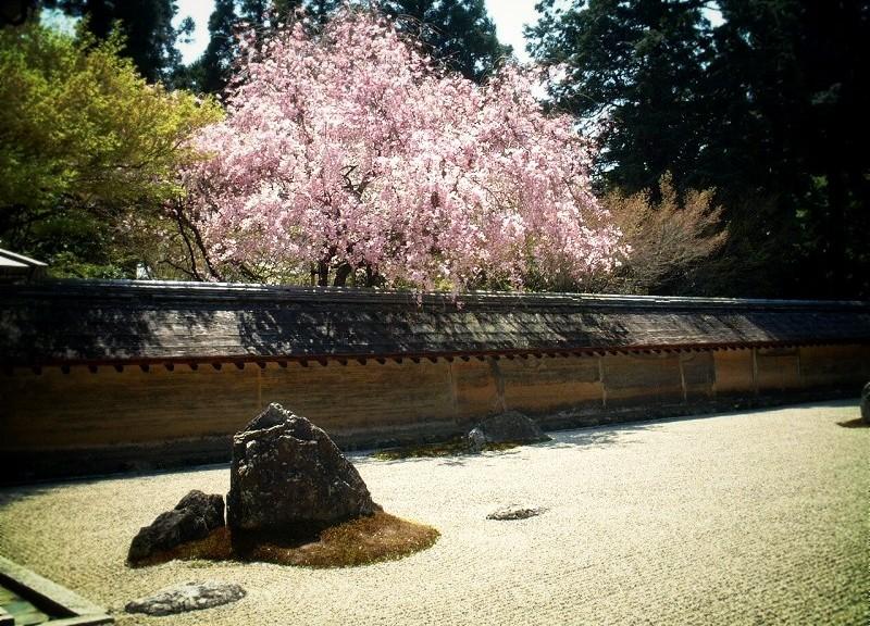 龍安寺石庭と桜
