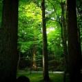 龍安寺 境内の緑