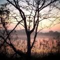 広沢池 早朝の広沢池