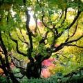 高桐院 紅葉の庭園