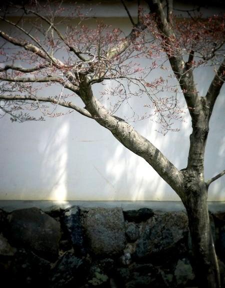 弘源寺の前で