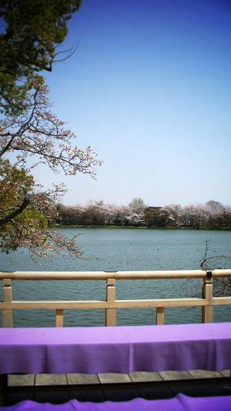 大覚寺 大沢池にて
