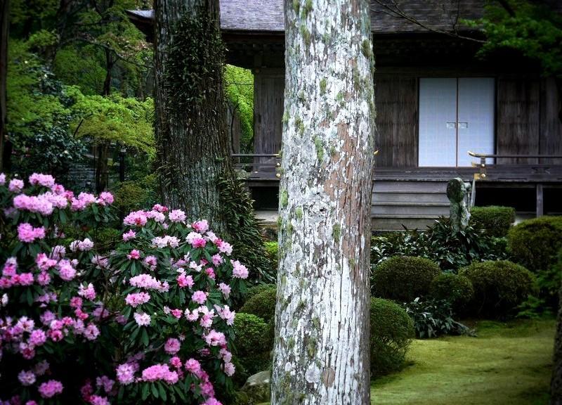 三千院 有清園と石楠花