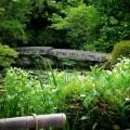 金地院 弁天池