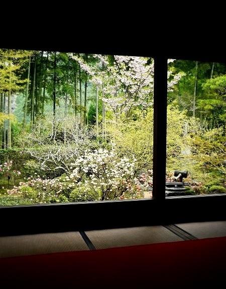 宝泉院 桜と額縁庭園