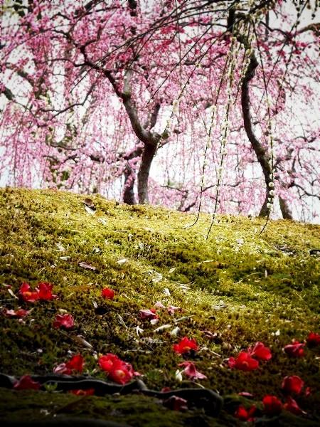 城南宮 枝垂れ梅と散り椿
