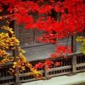 石道寺 本堂と紅葉