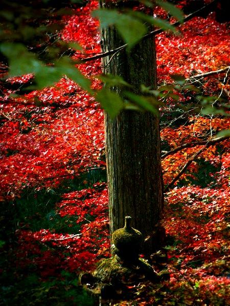 西明寺 境内の紅葉