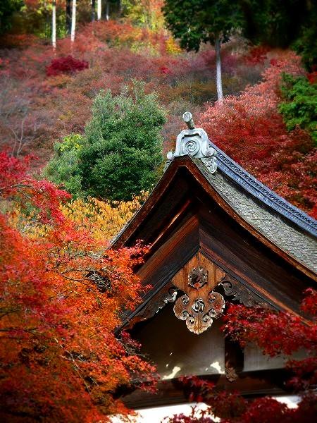 西明寺 本堂と紅葉