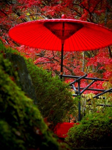 神護寺 野点傘