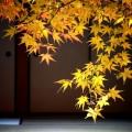 圓光寺 境内の紅葉