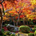 圓光寺 十牛の庭