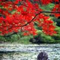 平安神宮 中神苑