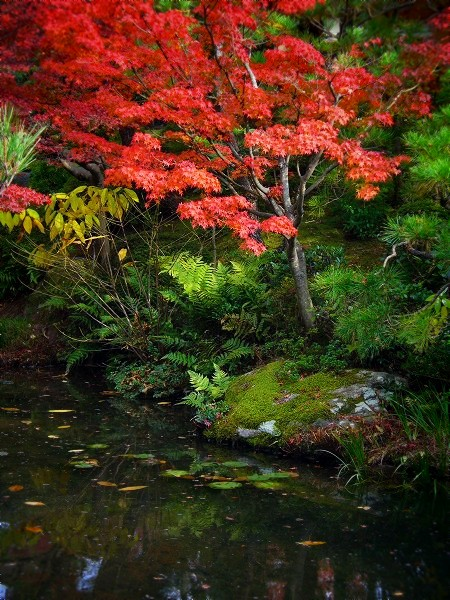 白河院:紅葉の庭園