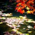 洛翠 陽光と紅葉