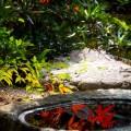 清凉寺 庭園と手水鉢