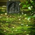 東林院:沙羅双樹と石仏