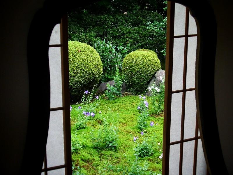 天得院 桔梗の庭園
