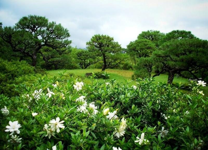 依水園:初夏の緑