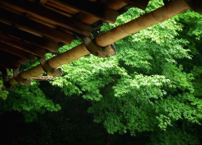 詩仙堂 竹の雨どい