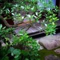 大橋家庭園 中庭