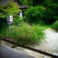 円成寺 境内の萩