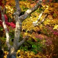 法華寺 境内の紅葉