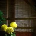 法華寺 簾と菊