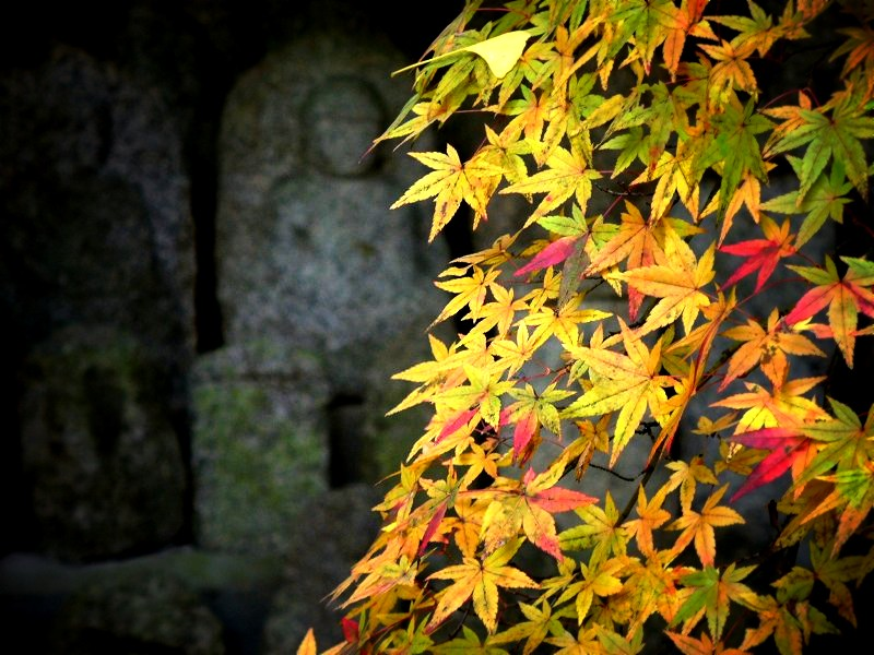 蓮華寺 紅葉と石仏