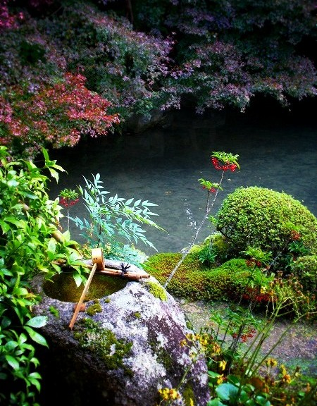 蓮華寺 池泉庭園にて