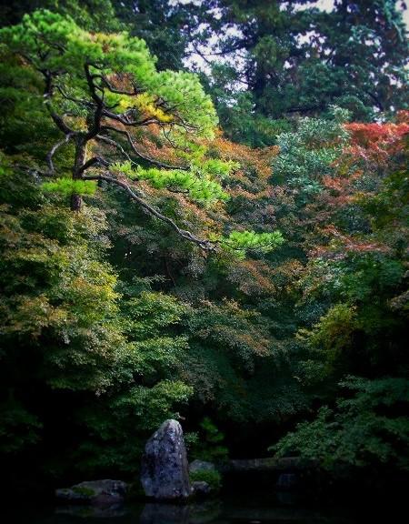 蓮華寺 池泉観賞式庭園
