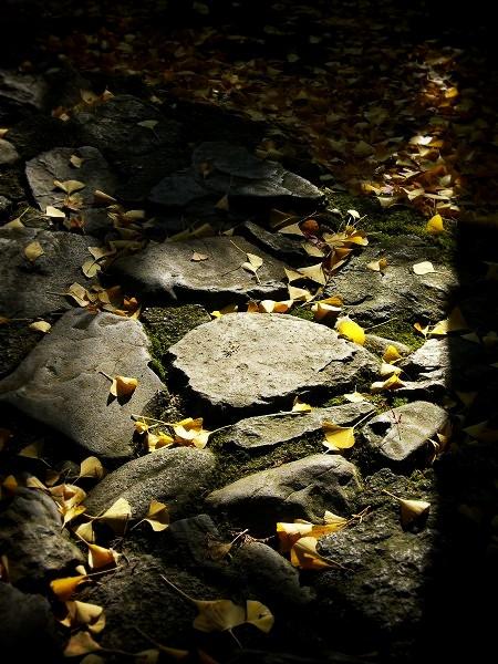 蓮華寺 石畳と紅葉