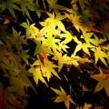蓮華寺 境内の紅葉