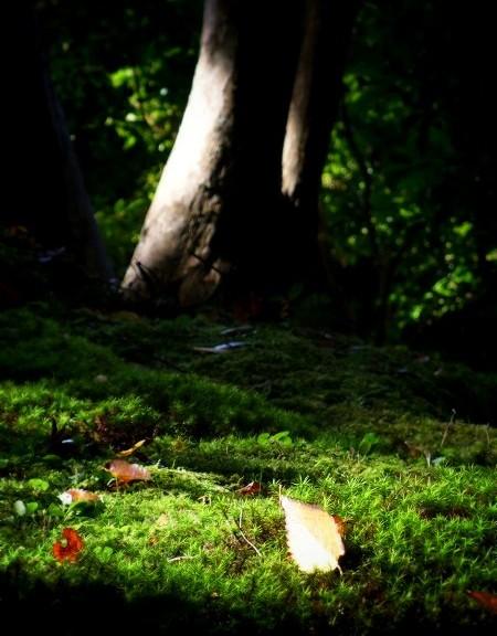 蓮華寺 境内の苔