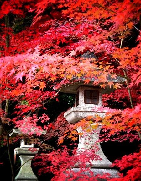 大原野神社 紅葉と石灯籠