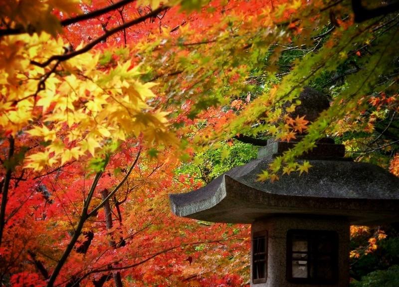 大原野神社 紅葉と灯籠