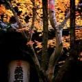 勝持寺 花の寺の紅葉