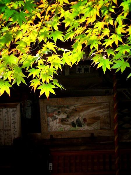 勝持寺 境内の紅葉