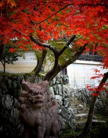 勝持寺 狛犬と紅葉