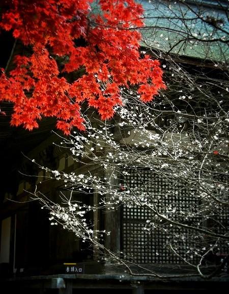 金剛輪寺 本堂と紅葉