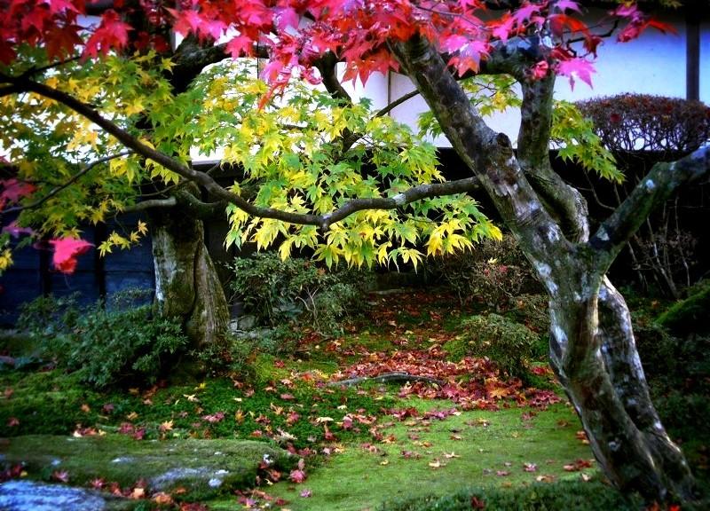 西明寺 本坊の紅葉