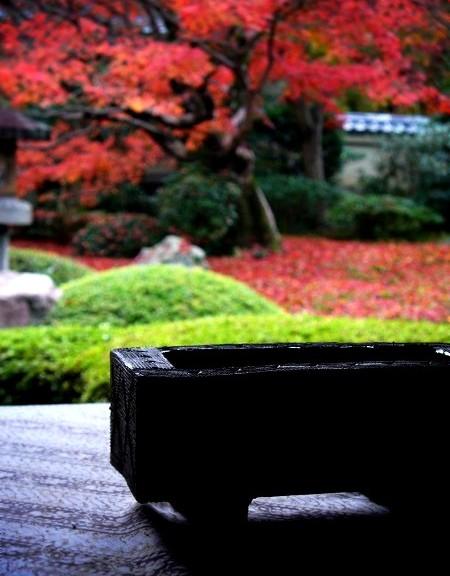雲龍院 散紅葉の庭園にて