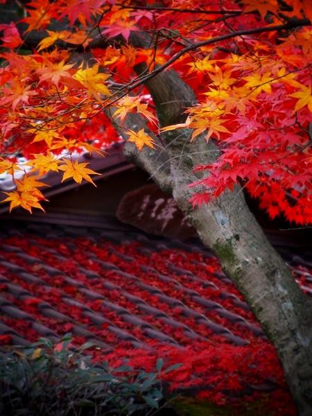 大法院 有隣軒の紅葉
