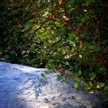 退蔵院 庭石と影